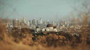 the Los Angeles skyline, seen through some bushes in the hills surrounding LA.