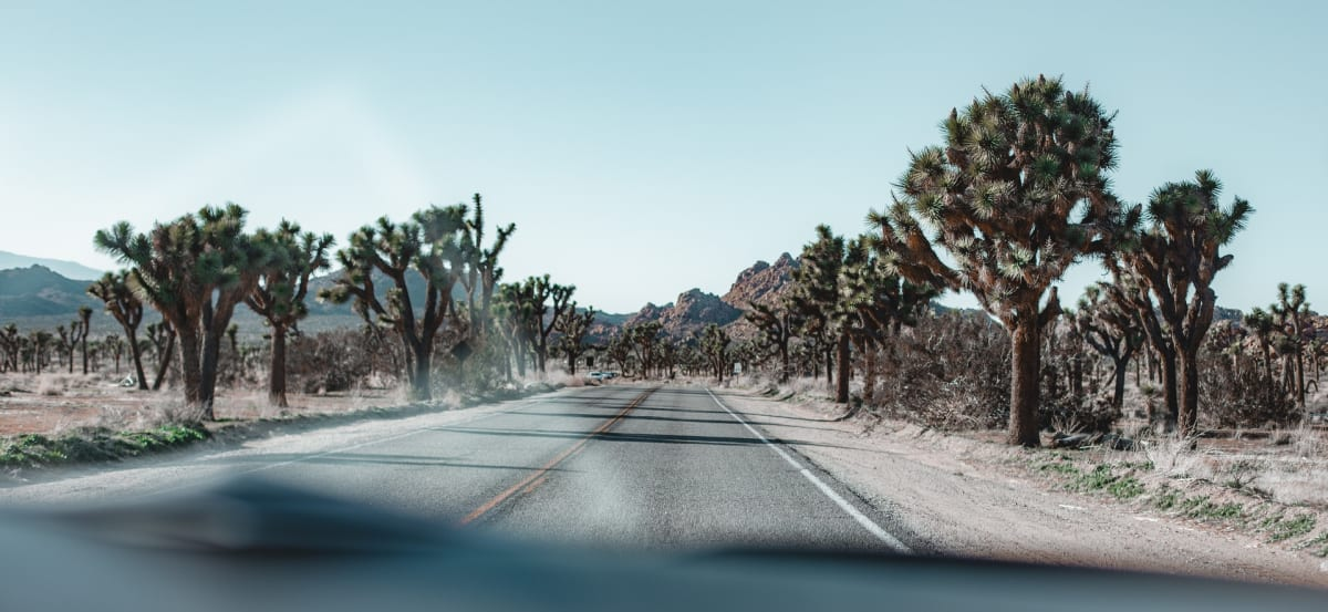 Joshua Tree National Park - a national park near Los Angeles. A two-lane road with Joshua trees on both sides.