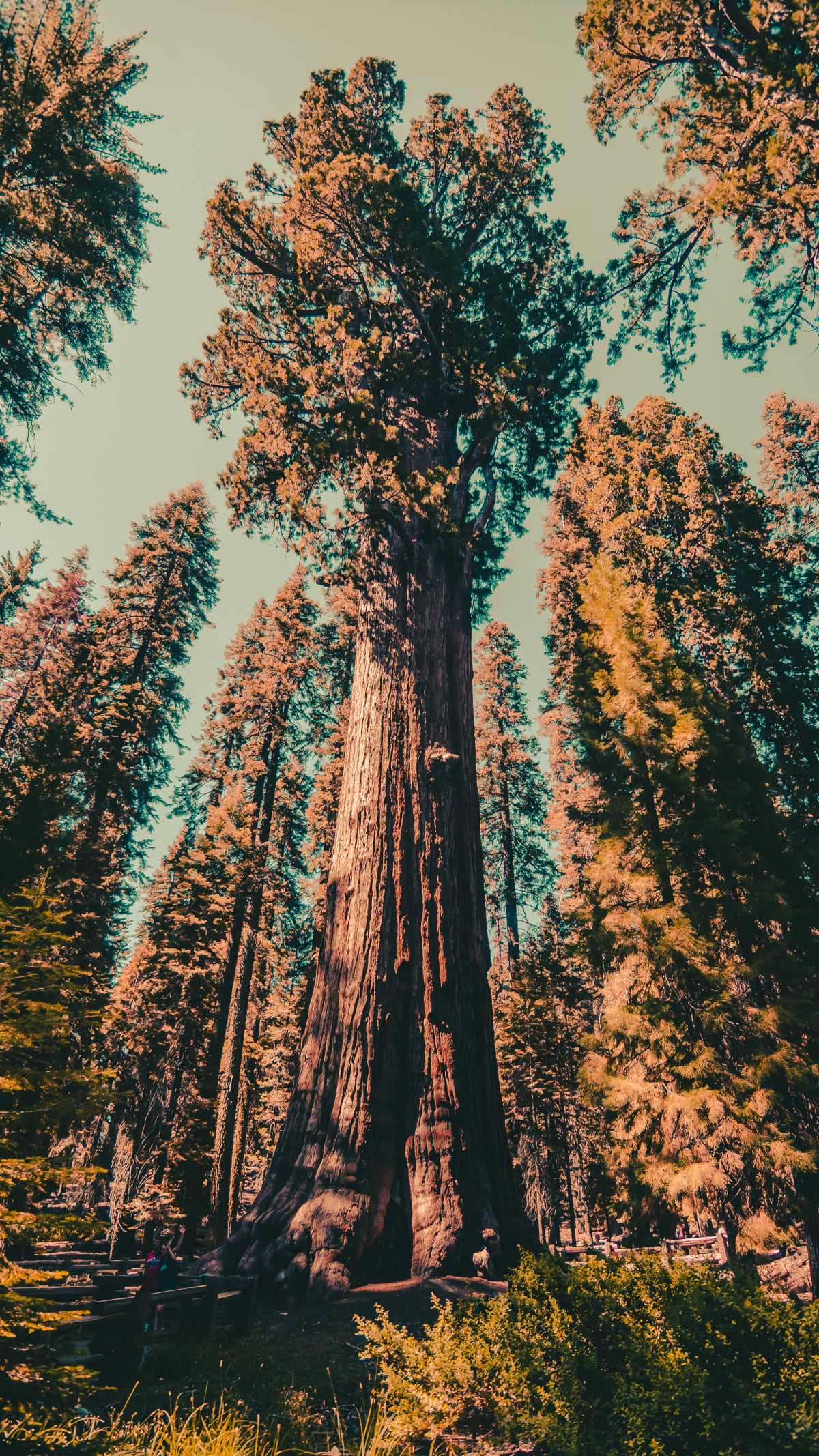 General Sherman at Sequoia National Park - a national park near Los Angeles.