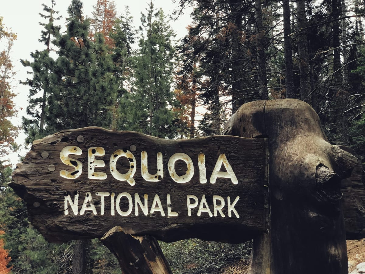 Sequoia National Park. Photo by James Lee