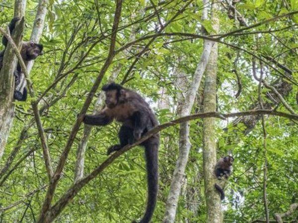 Monkeys on Natural Habbitat