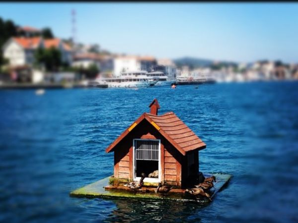 Bird house in the middle of the sea