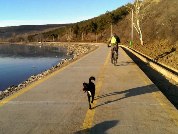 Bicycle ride with friend and dogs