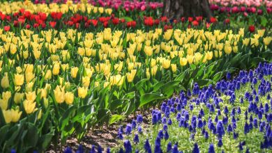 Photo of 【ベトナム人ライターから見た日本】花の国日本