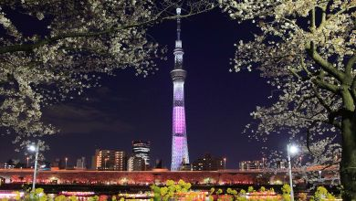 Photo of Entranced by cherry blossoms at Sumida Park and pinkTokyo Skytree
