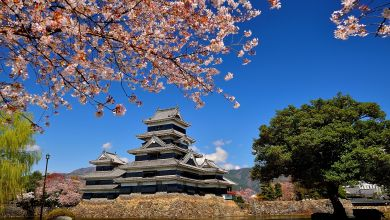 Photo of Matsumoto Castle – splendid collaboration between castle and cherry blossoms