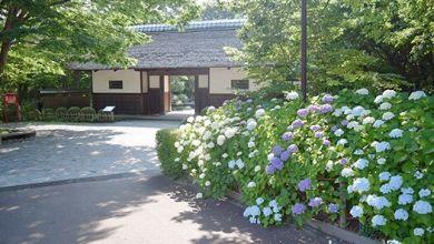 Photo of Lễ hội hoa cẩm tú cầu 10000 cây tại Fuchushi Kyodonomori Museum – Tokyo