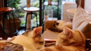Photo of Dịch vụ lưu trú mới: ở trọ cùng mèo