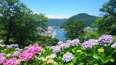 Photo of Top 10 điểm và thời gian ngắm cẩm tú cầu đẹp ở Kansai, 2020
