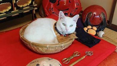 Photo of Nyannyanji – ngôi chùa ở Kyoto có mèo làm trụ trì