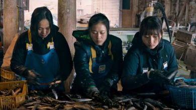 Photo of Along The Sea – phim hợp tác về cuộc sống khó khăn của thực tập sinh người Việt tại Nhật