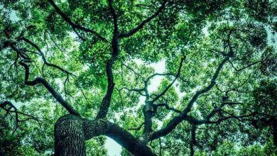 Photo of Phong cảnh bốn mùa nước Nhật tại vườn Kurondo