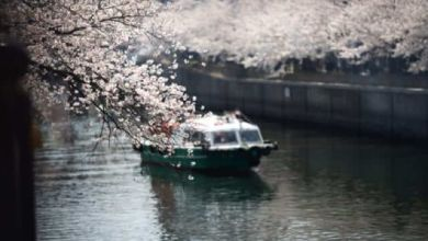 Photo of Hanami 2020: Top 10 điểm ngắm hoa anh đào đẹp nhất Osaka