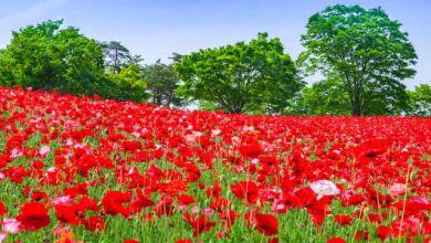 Photo of Gợi ý 3 điểm ngắm hoa đẹp gần Tokyo trong tháng 4
