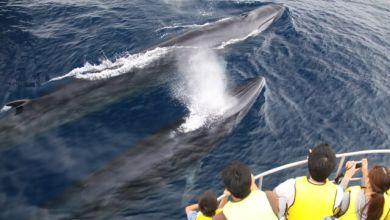 Photo of Tại sao Nhật Bản rút khỏi IWC và tiếp tục đánh bắt cá voi?