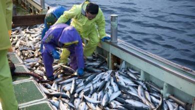 Photo of Ishikawa – Nhật Bản: cứ 18 ngư dân thì 1 ngư dân là người nước ngoài