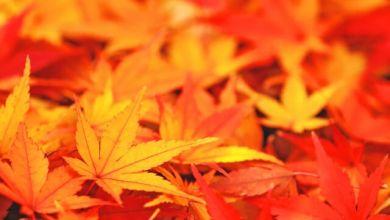 Photo of [Mùa lá đỏ 2019] Điểm ngắm lá đỏ tuyển chọn khu vực Hokkaido và Tohoku năm nay