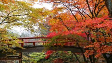 Photo of [Mùa lá đỏ 2019] Điểm ngắm lá đỏ tuyển chọn khu vực Kanto năm nay