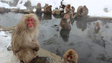 Photo of Top 10 điểm thăm quan được yêu thích nhất ở Nagano