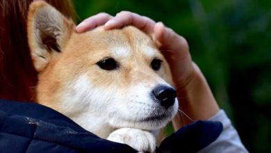 Photo of Một số lưu ý khi nuôi thú cưng tại Nhật Bản