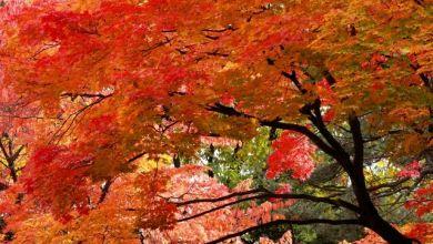 Photo of Top 10 điểm ngắm lá đỏ đẹp nhất Kanagawa 2019