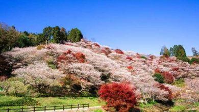 Photo of 6 điểm du lịch hấp dẫn tại thành phố Toyota – tỉnh Aichi nhất định phải ghé thăm