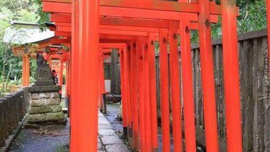 Photo of Kiến trúc Nhật Bản cùng cổng son Torii nối tiếp nhau ở đền Nedu, Tokyo
