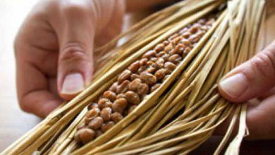 Photo of Ăn natto Nhật Bản theo 5 cách này bạn sẽ trở nên đẹp hơn