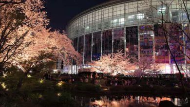 Photo of Mori Garden điểm ngắm hoa anh đào về đêm đầy hấp dẫn tại Roppongi Hills
