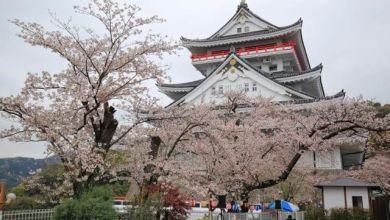 Photo of Lễ hội ngắm hoa anh đào tại thành Atami – Atamijyo Sakura Matsuri 2020