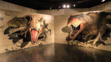 Photo of Art Rick Museum – địa chỉ chụp ảnh độc lạ ở Yokohama