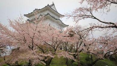 Photo of Công viên di tích thành Odawara – nơi thưởng thức vẻ đẹp mùa xuân Nhật Bản
