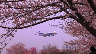 Photo of Ngắm máy bay giữa vườn hoa anh đào ở công viên Sakuranoyama tỉnh Chiba