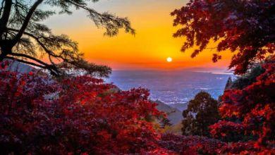 Photo of Top 10 điểm ngắm lá đỏ tuyển chọn khu vực Shikoku năm 2020