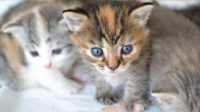 Photo of Tên của các loài mèo trên thế giới bằng tiếng Nhật