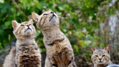 Photo of Khoảnh khắc dở khóc dở cười của khổ chủ với chính con mèo của mình