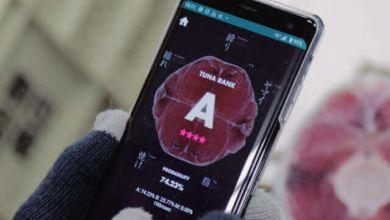 Photo of Dùng AI đánh giá chất lượng cá ngừ