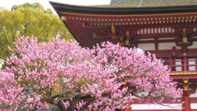 Photo of 2 địa điểm không thể bỏ qua khi tới Fukuoka