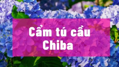 Photo of 9 điểm ngắm hoa cẩm tú cầu đẹp ở Chiba (2021)