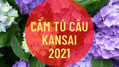 Photo of 5 điểm ngắm hoa cẩm tú cầu ở Kansai (hè 2021)