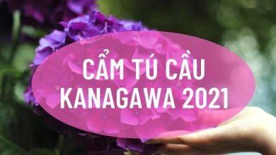 Photo of 10 điểm ngắm cẩm tú cầu đẹp ở Kanagawa (hè 2021)