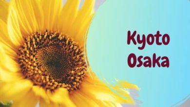 Photo of 2 cánh đồng hoa hướng dương ở Kyoto và Osaka (hè 2021)