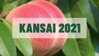 Photo of 3 điểm hái đào ở khu vực Kansai năm 2021