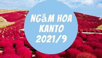 Photo of 7 địa điểm ngắm hoa lý tưởng ở Kanto vào tháng 9 (năm 2021)