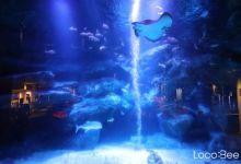 Photo of Sumida Aquarium – thuỷ cung dạng trải nghiệm ở Tokyo Skytree Town