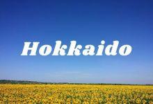 Photo of 3 vườn hoa hướng dương đẹp nhất Hokkaido hè 2021