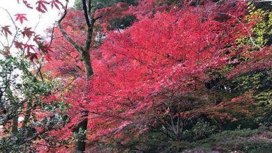Photo of Tokyo mùa thu lá đỏ