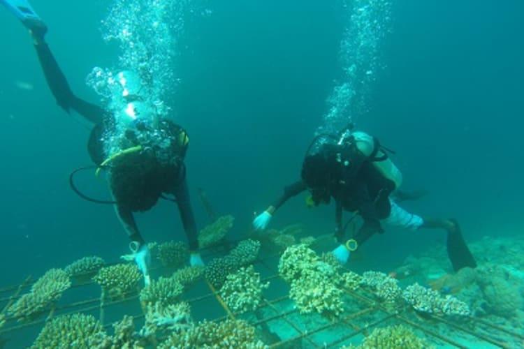 Dive To Conserve Marine Life In The Maldives In Maldives