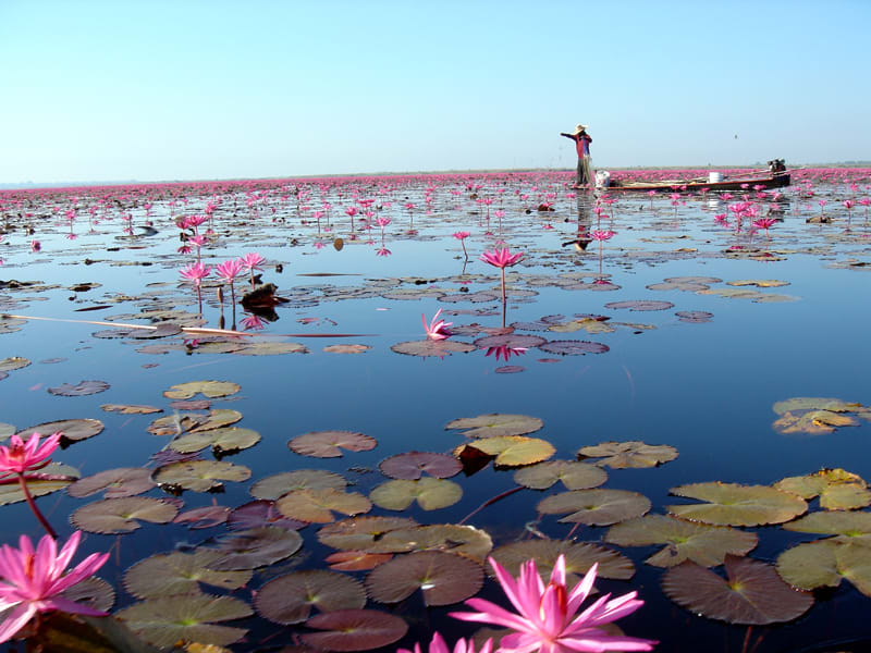 Gecko Villa Private Villa in the Rice Paddies Udon Thani Thailand Visit the nearby Red Lotus Sea