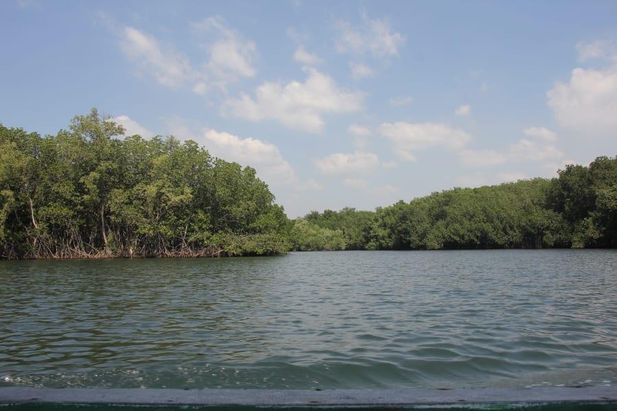 Etnica Mangroves, Sea Turtles and Jungle Maya Ruins Antigua, El Paredon and Tikal Guatemala undefined